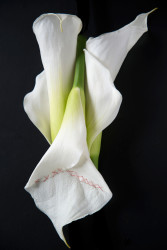 Three white Calla Lilies two upright and on inverted with red cross stitches