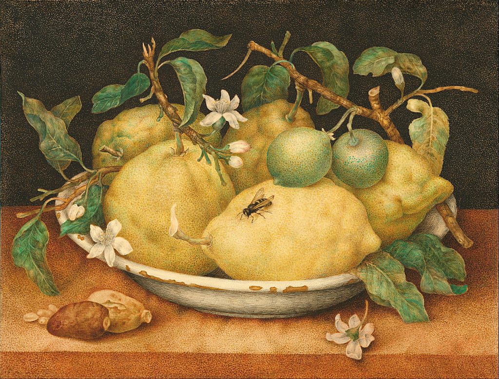 Painting of a bowl of five lemons with a bee 1640s